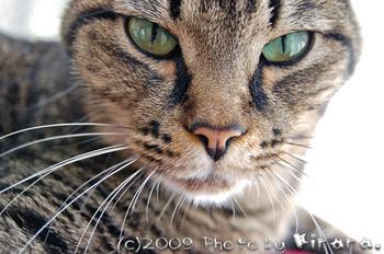2009 11 25 ひなたぼっこ5 の縮小.jpg