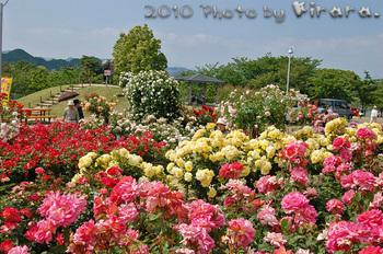 2010 05 16 バラ祭り 12.jpg