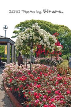 2010 05 16 バラ祭り 4.jpg