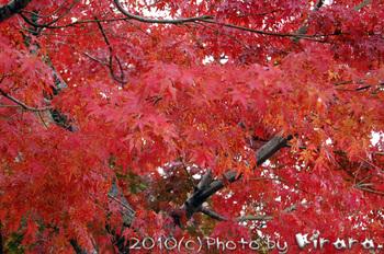 2010 11 22 7.jpg