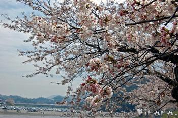 錦帯橋 1.jpg
